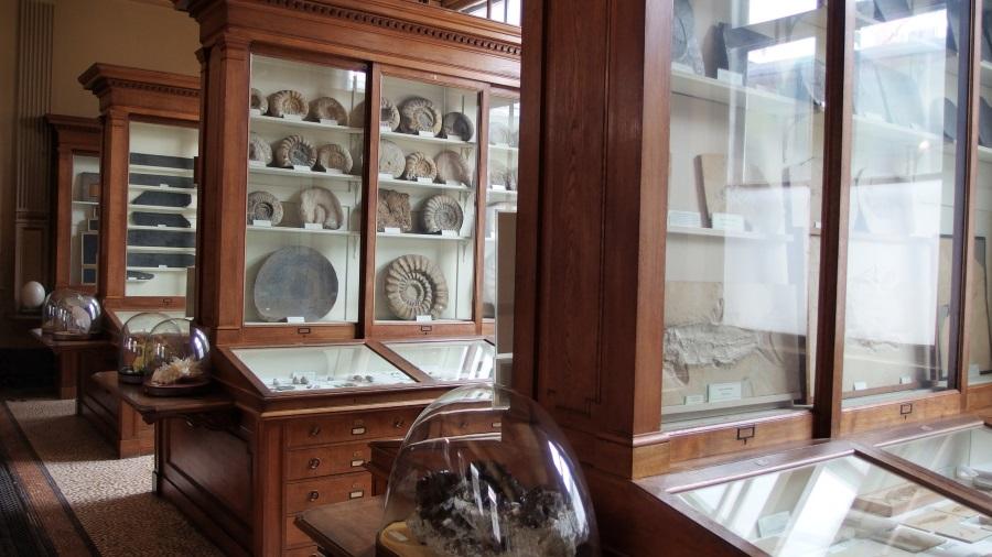 Teylers Museum Haarlem fossielenzaal