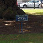Trinity College Dublin lawns